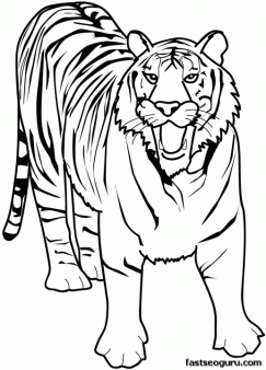 printable animal tiger of africa coloring pages  free