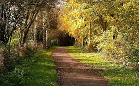 mysterious forest path grass wallpapers mysterious
