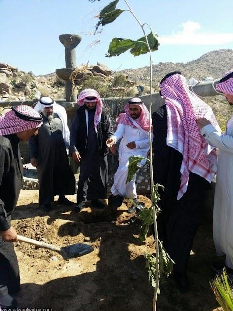 شجرة اللوز البجلي عبد الحكيم المالكي