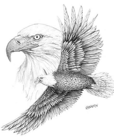 pin  susan carrell  eagle sketches eagle drawing