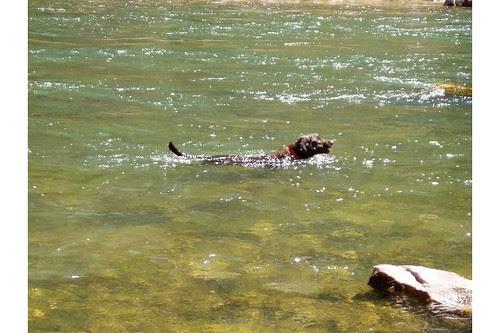 zeke-swimming