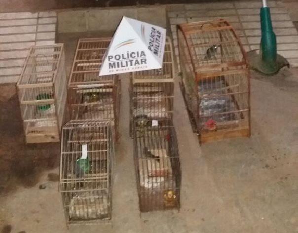 Aves foram apreendidas e serão levada para o Cetas em Montes Claros (Foto: Polícia Militar/Divulgação)