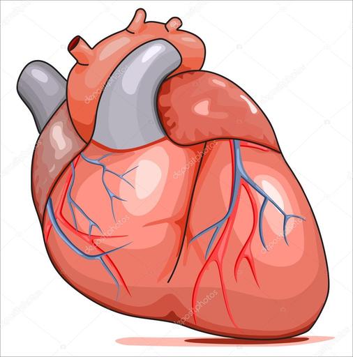 El Corazón Humano Aumentaty Community