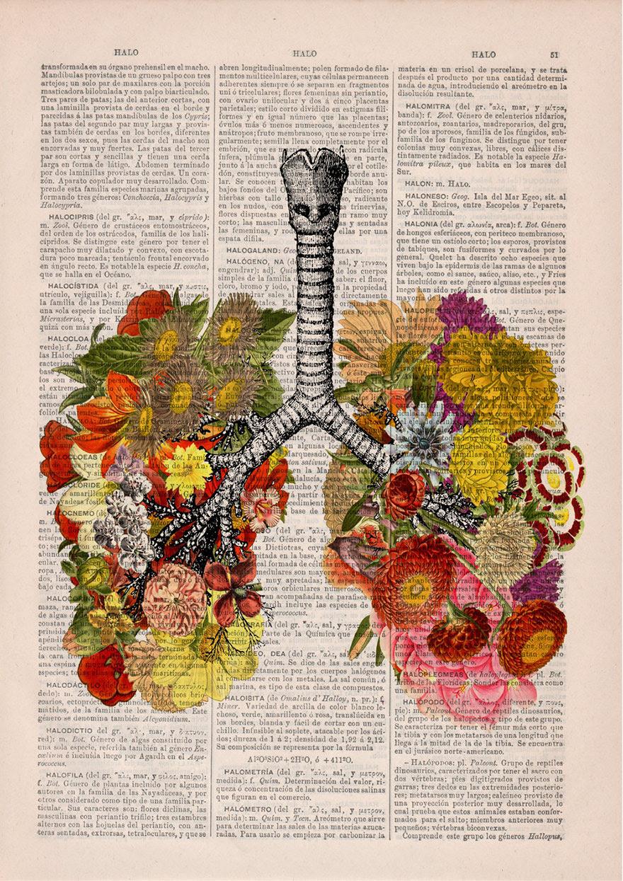 ilustraciones-anatomicas-flores-libros-viejos-prrint (2)
