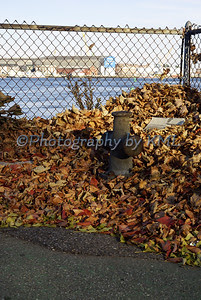 leaves piled against a chain link fence