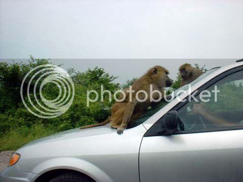 Carro mil é sempre mico