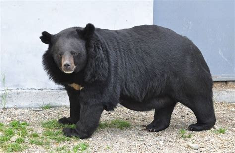 Ten amazing wild animals found in Pakistan   Paki Holic