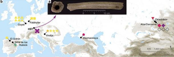 (a) Pictures of the HST femur, (b) map of archaeological sites where complete mtDNA from archaic humans were reconstructed