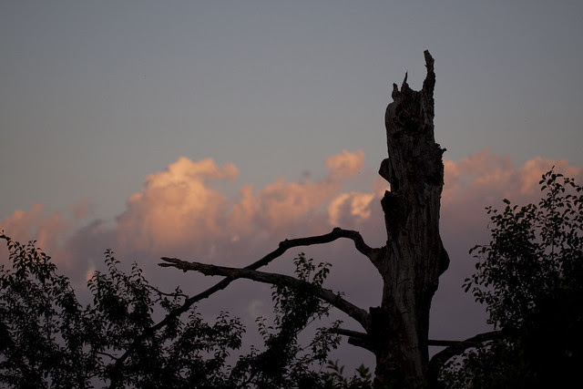 sunset behind my old tree