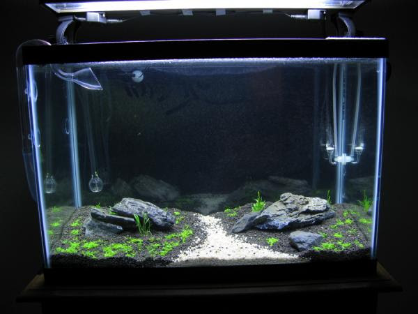 goldfish planted tank. w/ 5g and 20g planted tank
