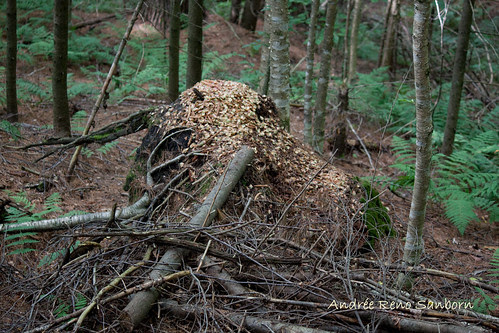 Examples of Squirrel and Chipmunk Middens-9.jpg
