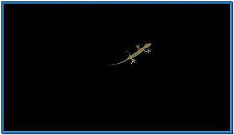 screensaver audi gecko