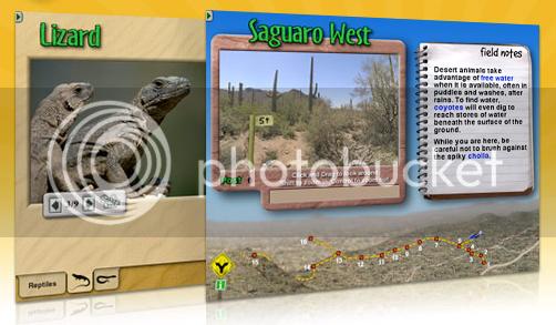 Digifrog Desert