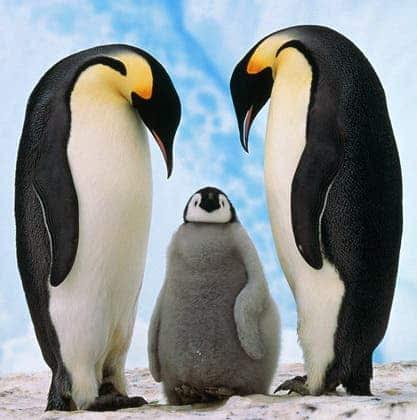 http://www.zmescience.com/wp-content/uploads/2011/03/penguin.jpg