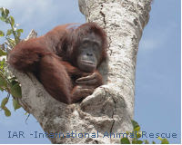 Sustainable Does Not Mean Destroying Rainforests and Starving Orangutans!