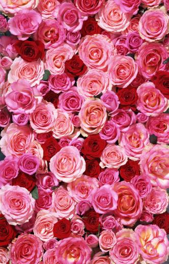 ピンク色のスマホ壁紙 検索結果 1 画像数55969枚 壁紙 Com