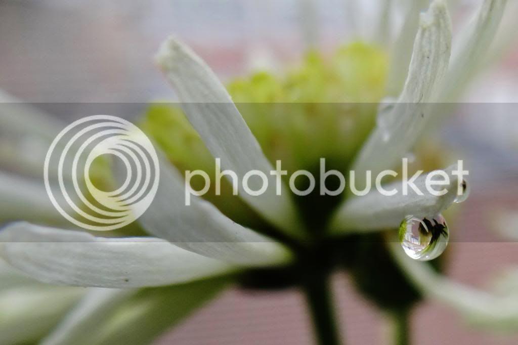 photo dr1_zps49a75662.jpg