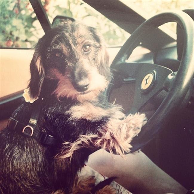 cachorros-ricos-3