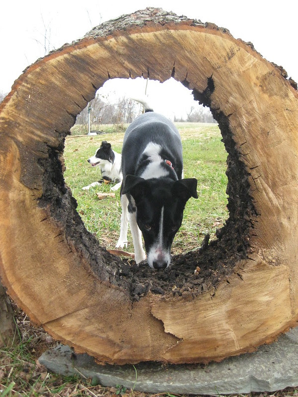 birdie and cowboy and hollow tree stump