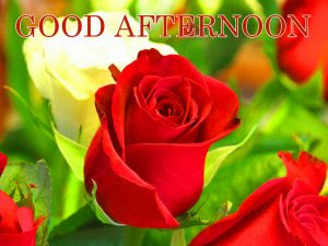 222 Good Afternoon Images Photo Hd Download Good Morning