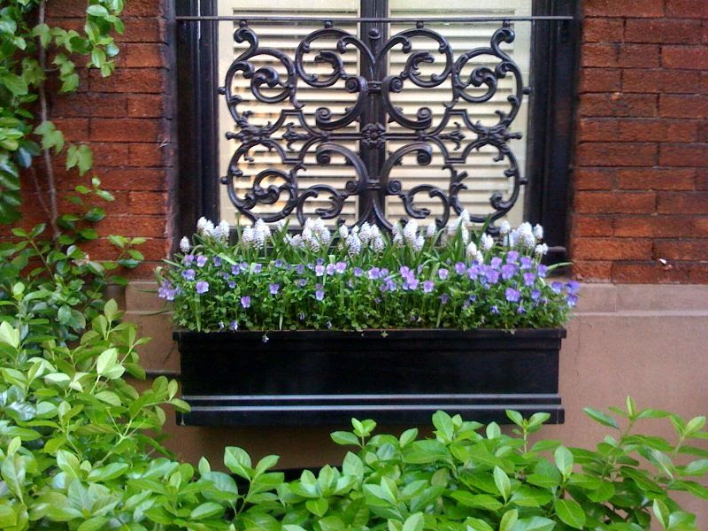 northern window box violas low plantings