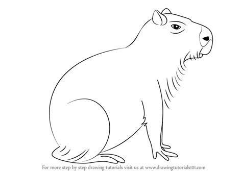 Learn How to Draw a Capybara (Other Animals) Step by Step : Drawing Tutorials