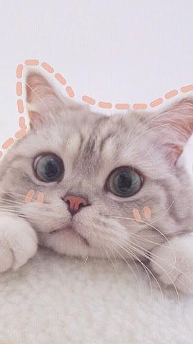 Kucing Lucu Aesthetic