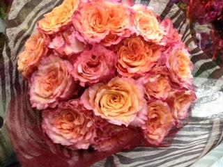 薔薇フリースピリット 花まみれ 楽天ブログ
