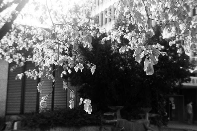 spring leaves (25/36)