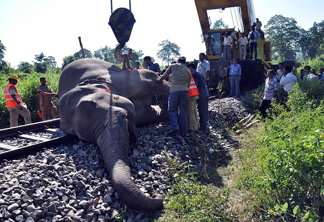 Rescue: The Recovery train prepares to winch the stricken elephant off the line and remove it for treatment