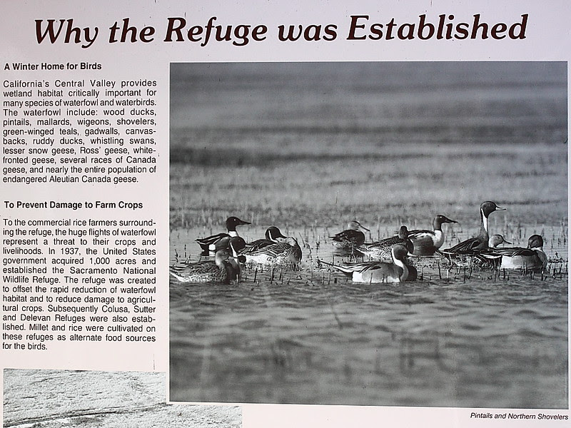 IMG_6227 Why Sacramento National Wildlife Refuge Was Established