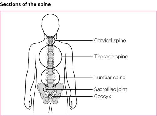 The Cause of Back Pain: What is It?