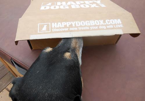 HappyDogBox_Tut_111713b