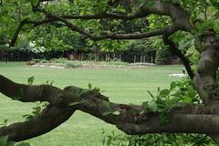 white house vegetable garden through the trees