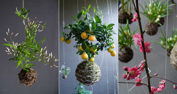 Create An Oasis Of Hanging Plants In Your Home With String Gardens