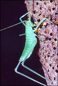 grasshopper death