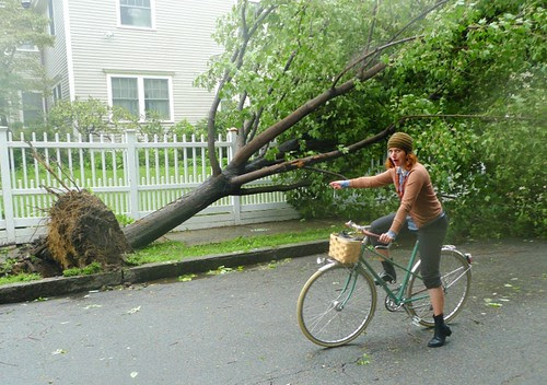 Irene, Toppled Tree