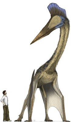 An artist's impression showing the scale between a human and an azhdarchid