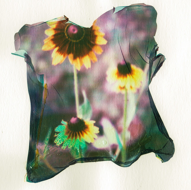 Emulsion Lift - Flowers - Copyright © 2013 Marcin Michalak Photography.