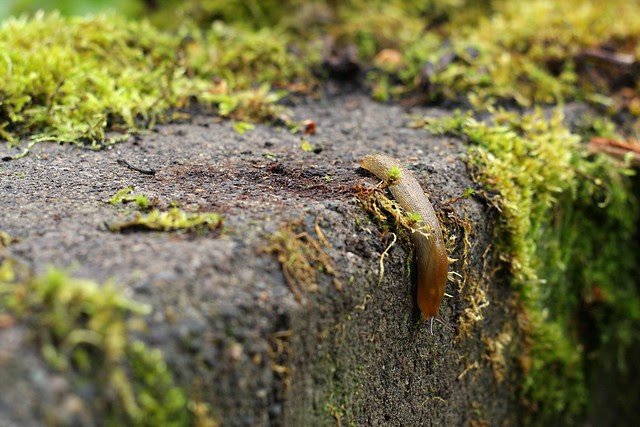 slug, august '08