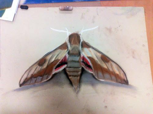 Spurge Hawk-moth - Chalk Pastel by Bennyboymothman