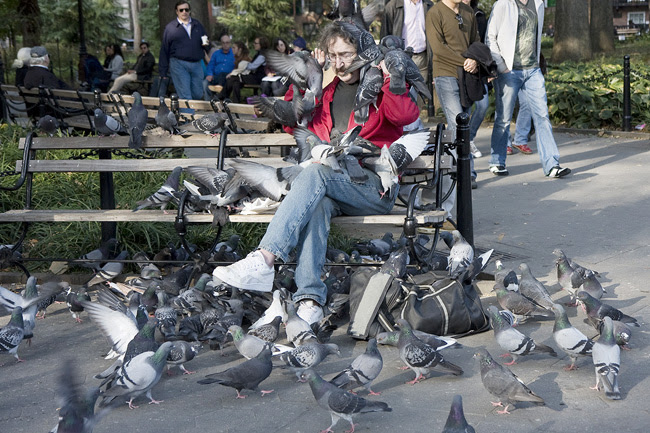 Pigeon Guy