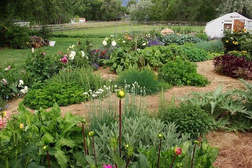 Vege Garden looking south