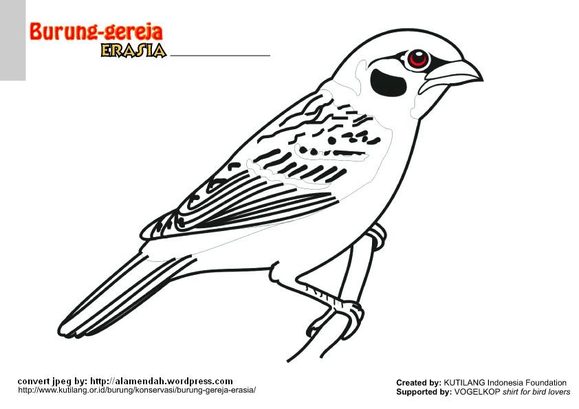 Gambar Burung Kiwi Gambarrrrrrr Slidehdco