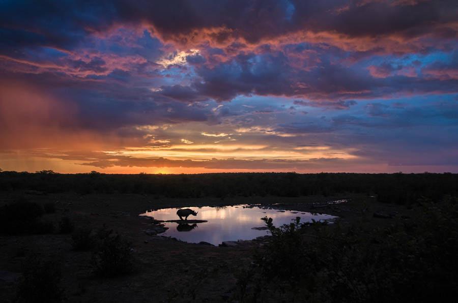 「アフリカの大地」の画像検索結果