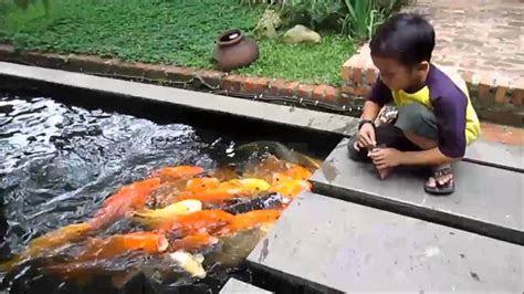 lucu anak kecil memberi makan ikan koi youtube