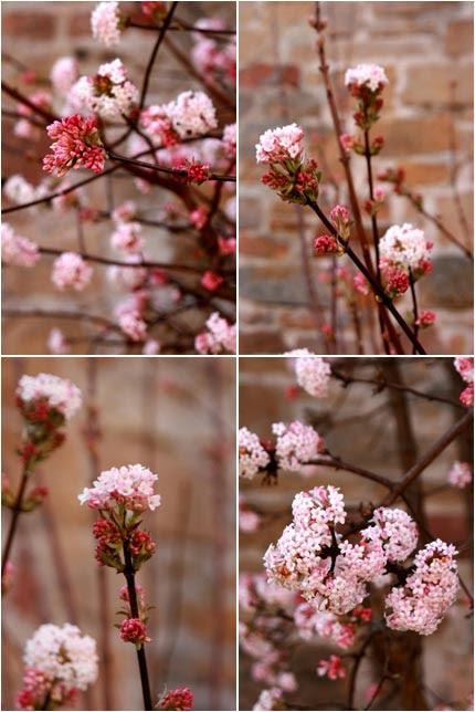 Come in primavera