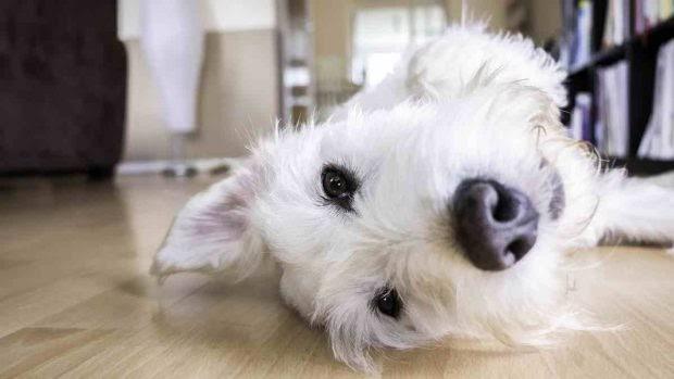 ¿Qué es el refuerzo negativo en perros?