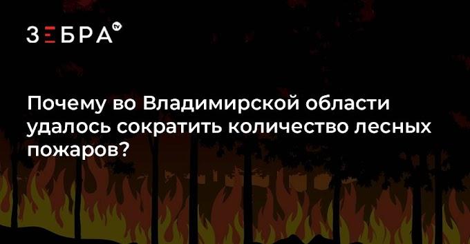 Почему во Владимирской области удалось сократить количество лесных пожаров?