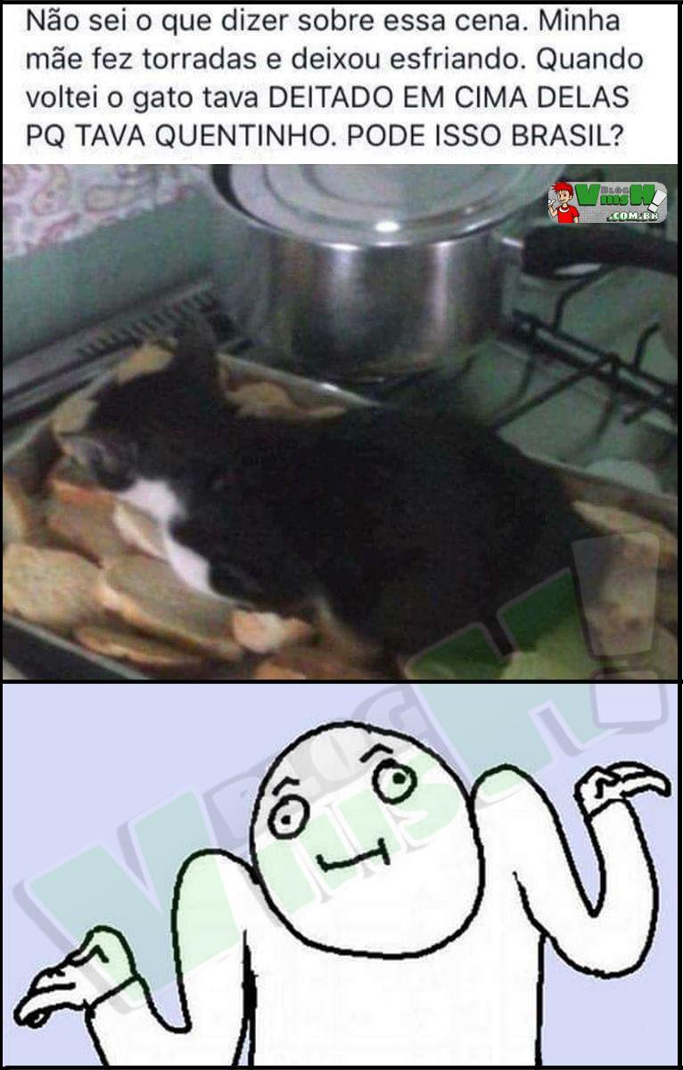 Blog Viiish - Entendo perfeitamente o gato